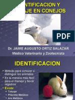 13. Identificacion y Tatuaje en Conejos