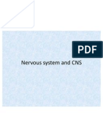 Nervous System and Central Nrevous System