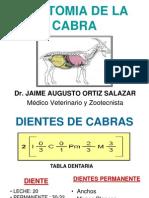 2. Anatomia de La Cabra