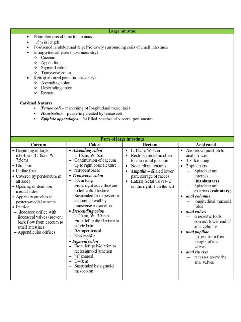 Summary Anatomy Of Large Intestine Large Intestine Rectum