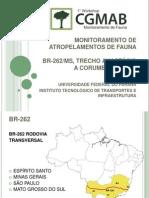 ATROPELAMENTO DE FAUNA - BR 262