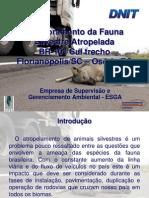 Monitoramento da Fauna Silvestre Atropelada - BR-101 Sul