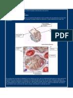 Las enfermedades intersticiales del pulmón