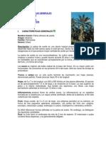 CARACTERÍSTICAS GENERALES DE LA PALMA DE ACEITE