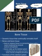 Bone Presentation Concept