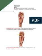 Para Anatomia