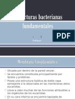 Estructuras Bacterianas Fund Amen Tales Final