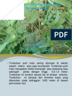 Pengamatan Perilaku Mimosa Pudica (Putri Malu) Ppt