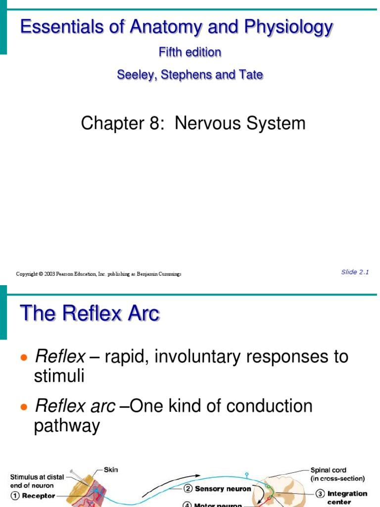 Reflexes, Brain VERY GOOD | Brainstem | Cerebrum