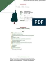 doc_site_serevicoseprodutos_livraria_Reflorestamento_Produção de mudas de Eucalipto