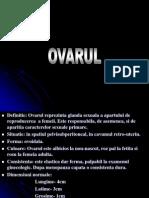 Organe Genitale Feminine