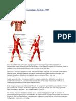 Anatomia Do Jiu Jitsu e Mma
