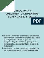 Estructura y Crecimiento Plantas Superiores II