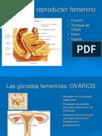anatomofisiologia_dicertacion