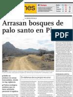 Bosques en riesgo en Piura, Perú por la tala ilegal