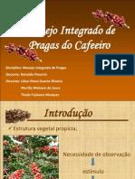 MIP - Café