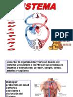 Pp t Circulatorio