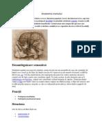 Anatomia craniului