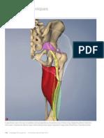 Working with Appendicular Sciatica, Part III (Myofascial Techniques)