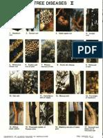Tree Diseases II