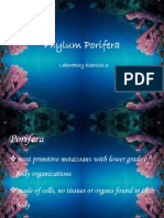 Phylum Porifera (Lab.exer.2)