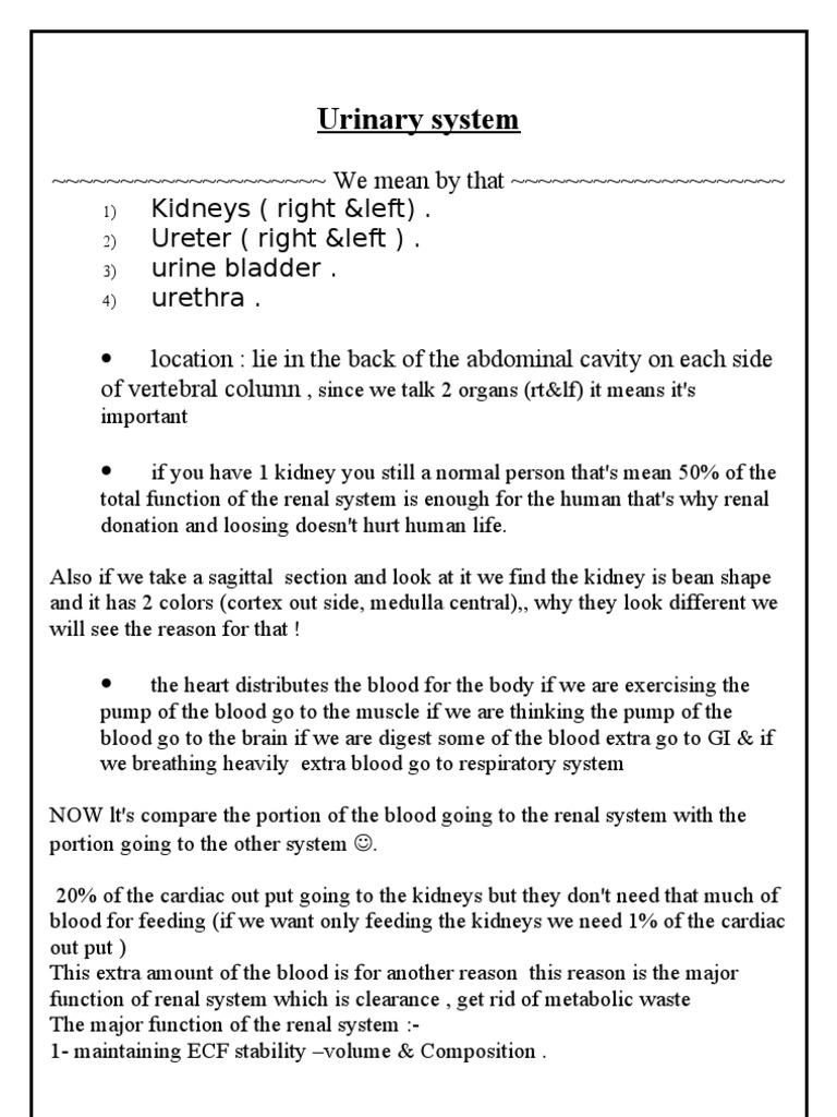 3 Urinary System Script Kidney Urinary System