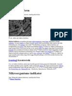 Bakteri koliform