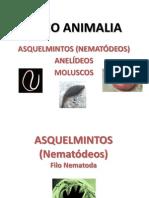 Biologia8Asquelmintos - Anelideos - Moluscos