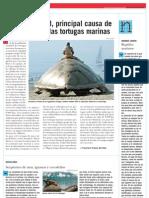 La pesca ilegal, principal causa de mortandad de las tortugas marinas