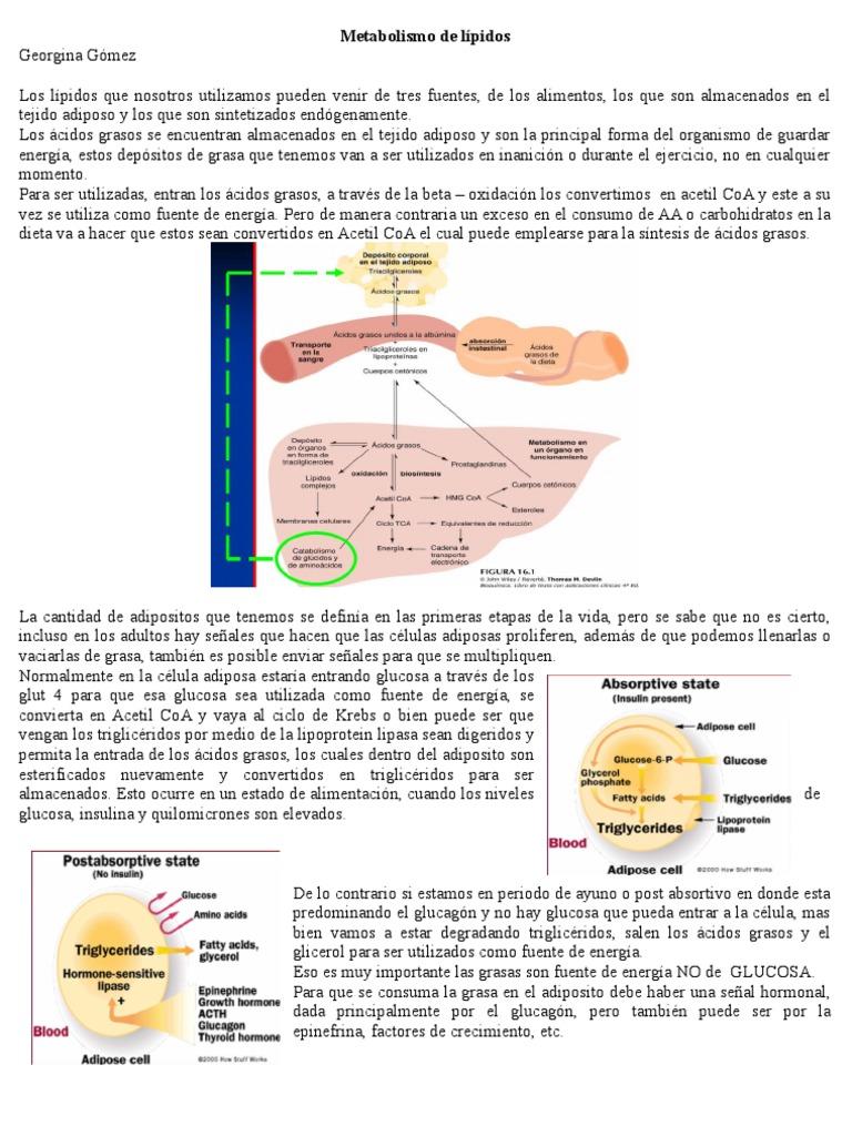 el pulpo para el acido urico acido urico dolor problemas de salud por acido urico