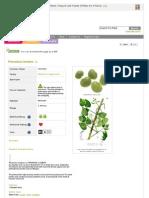 Www Pfaf Org User Plant Aspx LatinName Phaseolus Lunatus