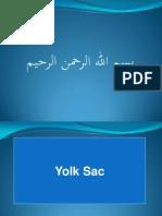 is Umblical Cord Yolk Sac