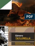 7 TAYLORELLA