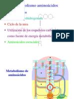 Metabolismo_aa