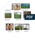 Agriculture Types