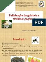 POLINIZAÇÃO DA GOIABEIRA- APRESENTAÇÃO