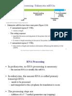 Ch13-2RNAprocess