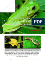 The Respiratory Structure and Breathing Mechanism in Animals