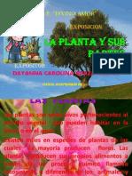 La Planta y Sus Partes