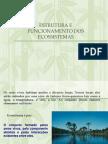 Estrutura Dos Ecossistemas