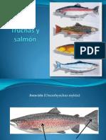 Truchas, salmón y púyen