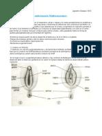 Tema 43-Ginecología UCA