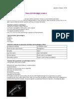 Tema 46-Ginecología UCA