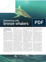 """February 2011 """"Swimming with Bronze Whaler sharks"""""""