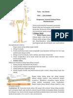 rangkuman anfis muskuloskeletal