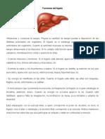Funciones Del Hgado y Organos