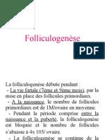 Folliculogenèse