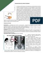 word paper RIÑON completo