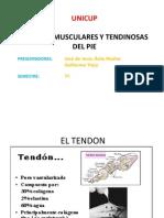Lesiones Musculares Del Miembro Inferior