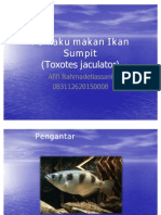 Perilaku Makan Ikan Sumpit